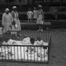 Neonati e puericultrici di un istituto dell'O.N.M.I. di Milano in un giardino
