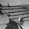 Operai al lavoro in un cantiere di rimboschimento in una zona montuosa della Calabria