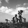 Squadra di operai impegnata in lavori di scavo e sbancamento nella vasta distesa del Tavoliere delle Puglie