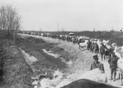 Riproduzione fotografica della I Guerra Mondiale - Carovana di soldati in marcia