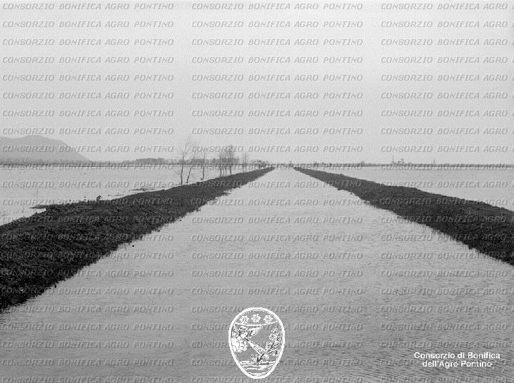 PONTINO/BOR001073.jpg