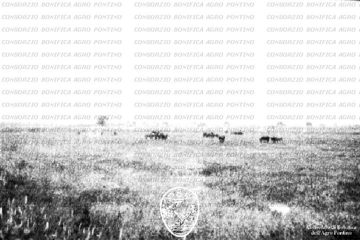 PONTINO/ROM000015.jpg