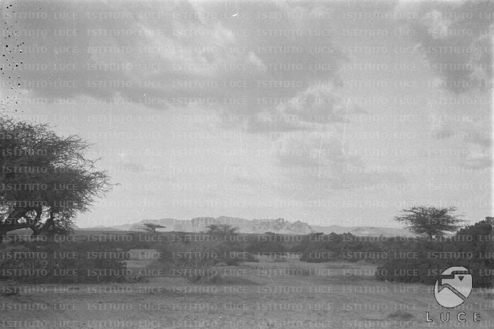 La savana somala alcuni alberi e arbusti emergono da una for Elenco senatori italiani