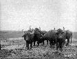 Bufali al Quadrato