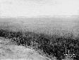 Lago dei Monaci, canneto visto dalle dune