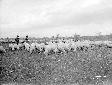 Pecore al pascolo presso il Lago di Caprolace