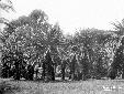 Villa Fogliano, palme nel parco