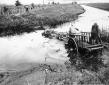 Passaggio con carro trainato da bufale del canale  ...