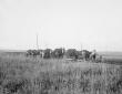 Colmata dei pantani del Litorale presso il Lago Mo ...