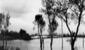 Piena del 18.11.35 a Ponte Maggiore fra Amaseno e  ...